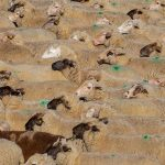 Zootecnia: come scegliere un'efficace recinzione elettrificata per l'allevamento